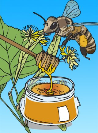 Illustration pot de miel abeille